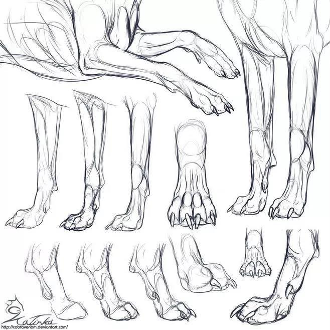 爪子的画法: 狗的种类太多,尾巴更是千差万别,这里主要讲狼的尾巴的