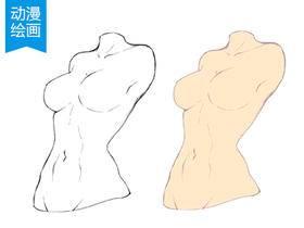 动漫绘画学习:人体躯干(胸部,臀部)、四肢的画法