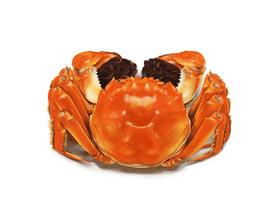 【PS绘画教程】写实螃蟹的画法