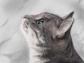 【PS绘画凯时娱乐】画一只好看写实的猫咪吧