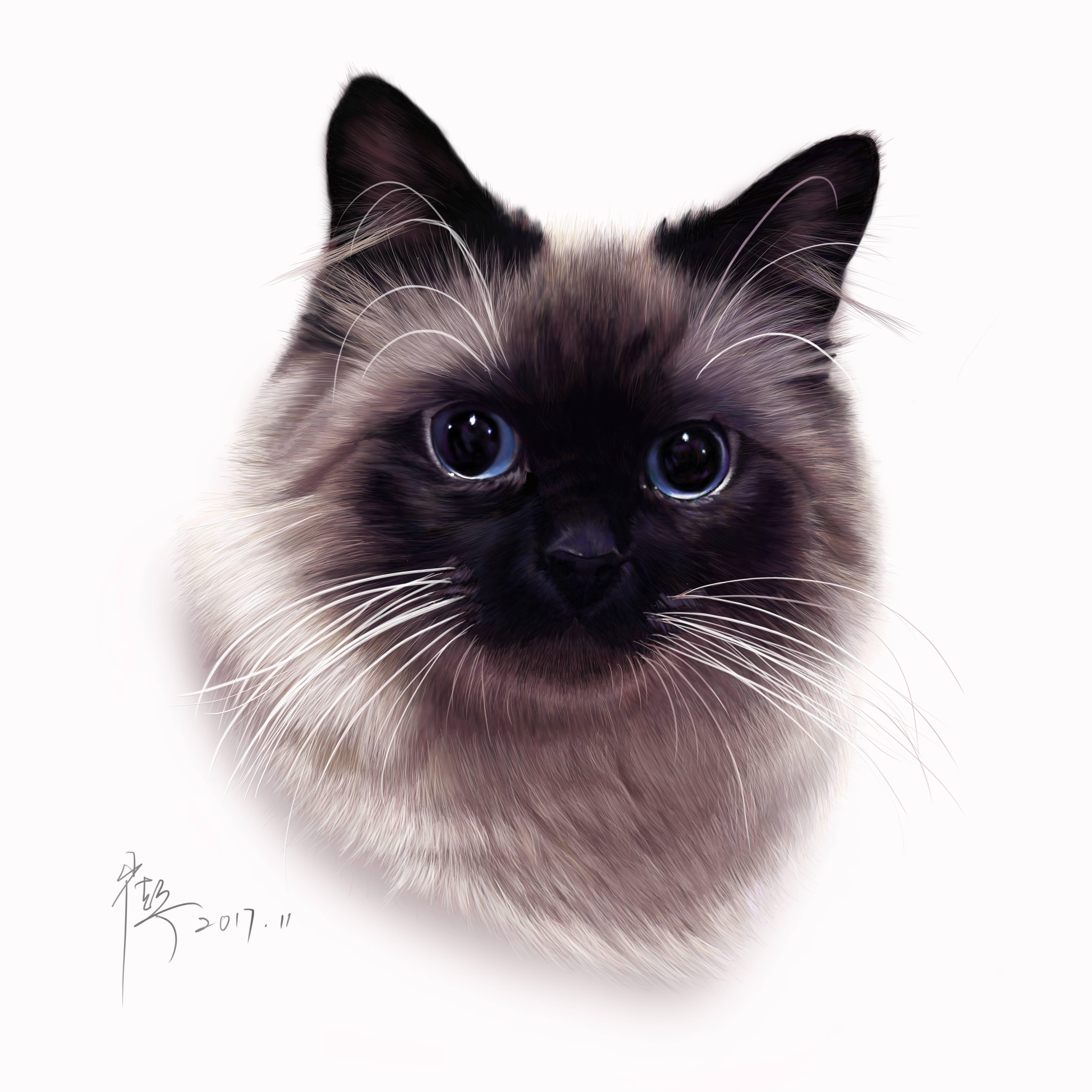 1962大猫