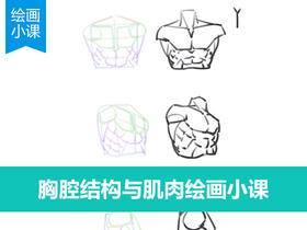人物胸腔结构与肌肉画法