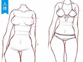 躯干结构与胖次泳衣的画法