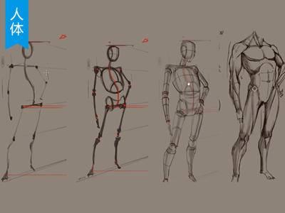 【人体入门必学】怎么画好人物动态姿势?_绘画教程