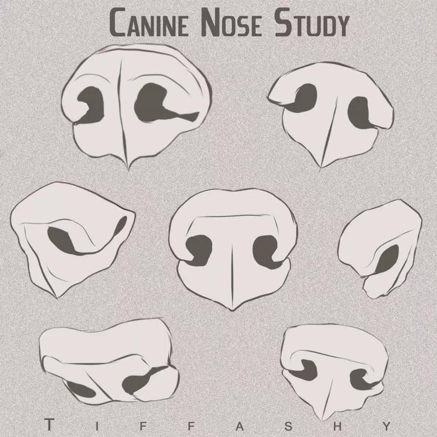 犬科动物绘制教程:狼与狗的画法