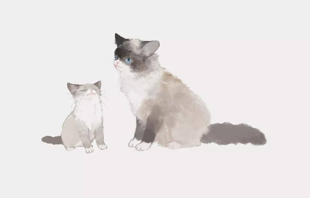 超级无敌可爱的猫咪~喵