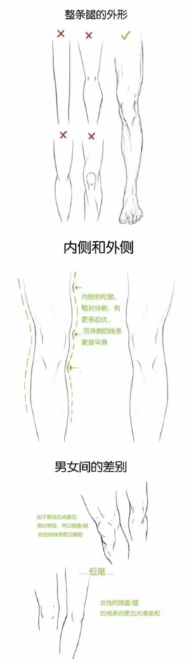 1,腿部的结构 人站立时 无论是从正面或侧面看 从大腿,膝盖到小腿