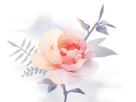 水彩花卉绘制方法