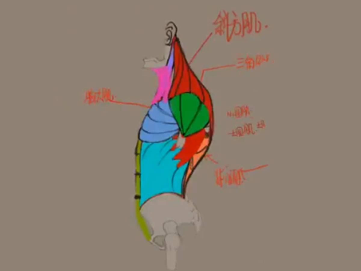 戳下图了解【人体结构造型                    吧!