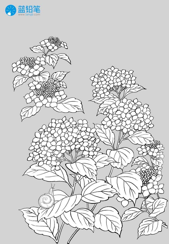 玩转古风插画——植物花卉素材大放送!(文末下载)