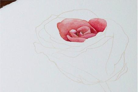 【水彩画教程】手绘玫瑰花的画法分享!