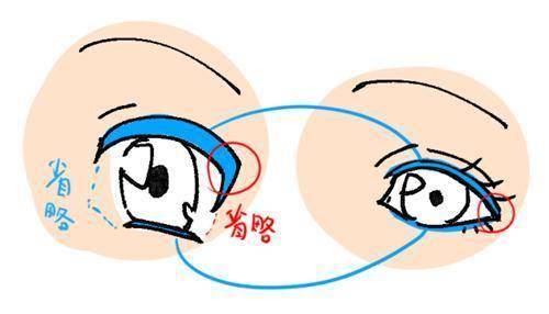 ▼眼睛结构,作为一个基础的知识根据不同的网站所带来的各种说明都