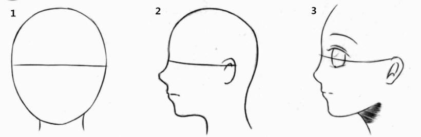耳朵外面结构图