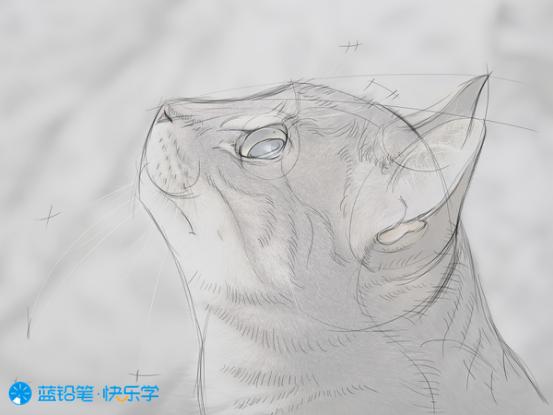 猫的画法:勾线