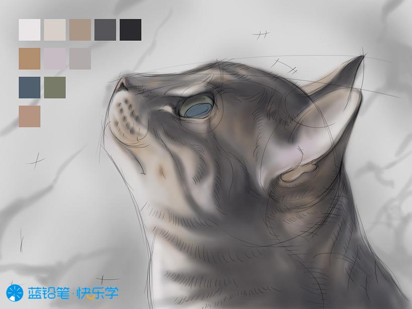 猫的画法:固有色