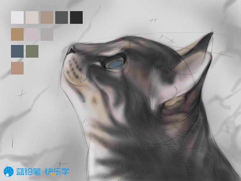 猫的画法:调整固有色