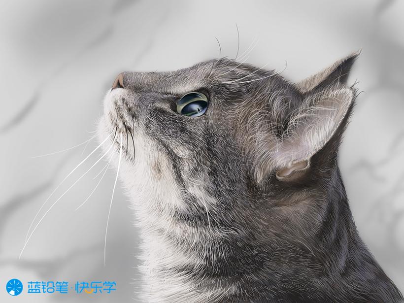 猫的画法:硬须