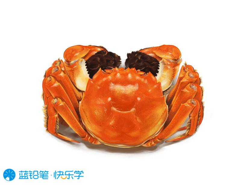 螃蟹的画法:高光与投影