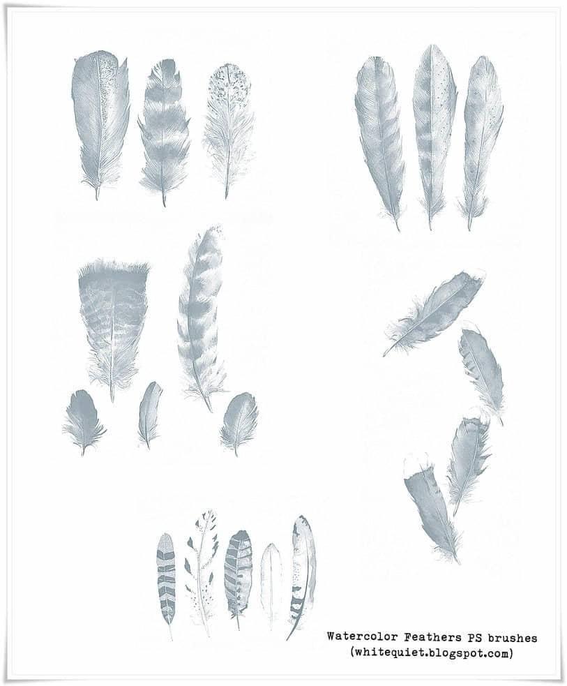 10,水彩手绘羽毛图形photoshop笔刷素材