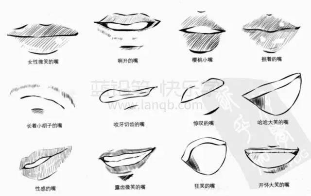 嘴巴内部结构图名称