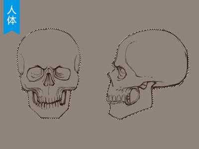【人体结构】人体头部的结构详解_绘画教程