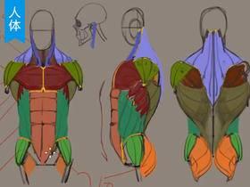 脖子的骨骼肌肉分析