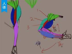 手臂的骨骼肌肉结构分析